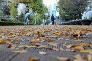 39年ぶり 東京地方の木枯らし1号発表なしが濃厚に