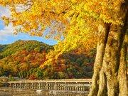 京都の紅葉は週末ラストチャンスか 寒さ対策は万全に