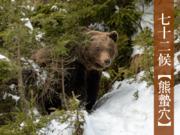 七十二候「熊蟄穴」 熊は冬眠中…でも油断大敵