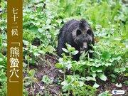 七十二候【熊蟄穴】冬眠中でも熊出没注意!