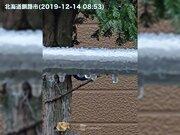 """冷たい雨が凍り付く 釧路から""""雨氷""""の報告"""