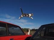 ネコ好き必見ニャン!「岩合光昭の世界ネコ歩き」の写真展が東京・大阪などで開催決定!