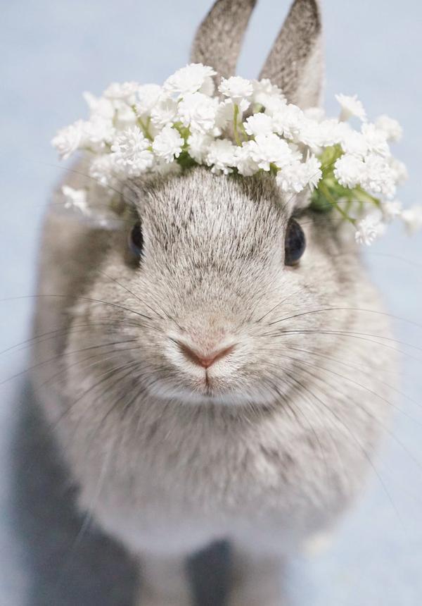かすみ草の花冠のうさぎ