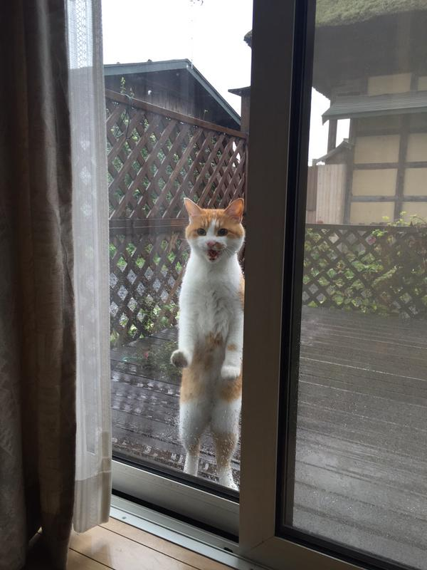 脱走直後に雨に降られた猫