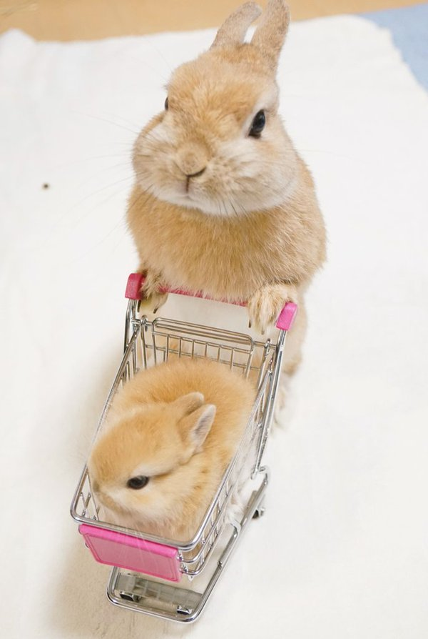 パパとお買い物