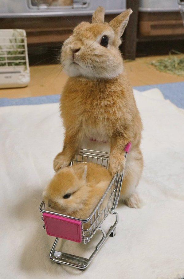 http://news.biglobe.ne.jp/img/blnews/animal160118_03.jpg