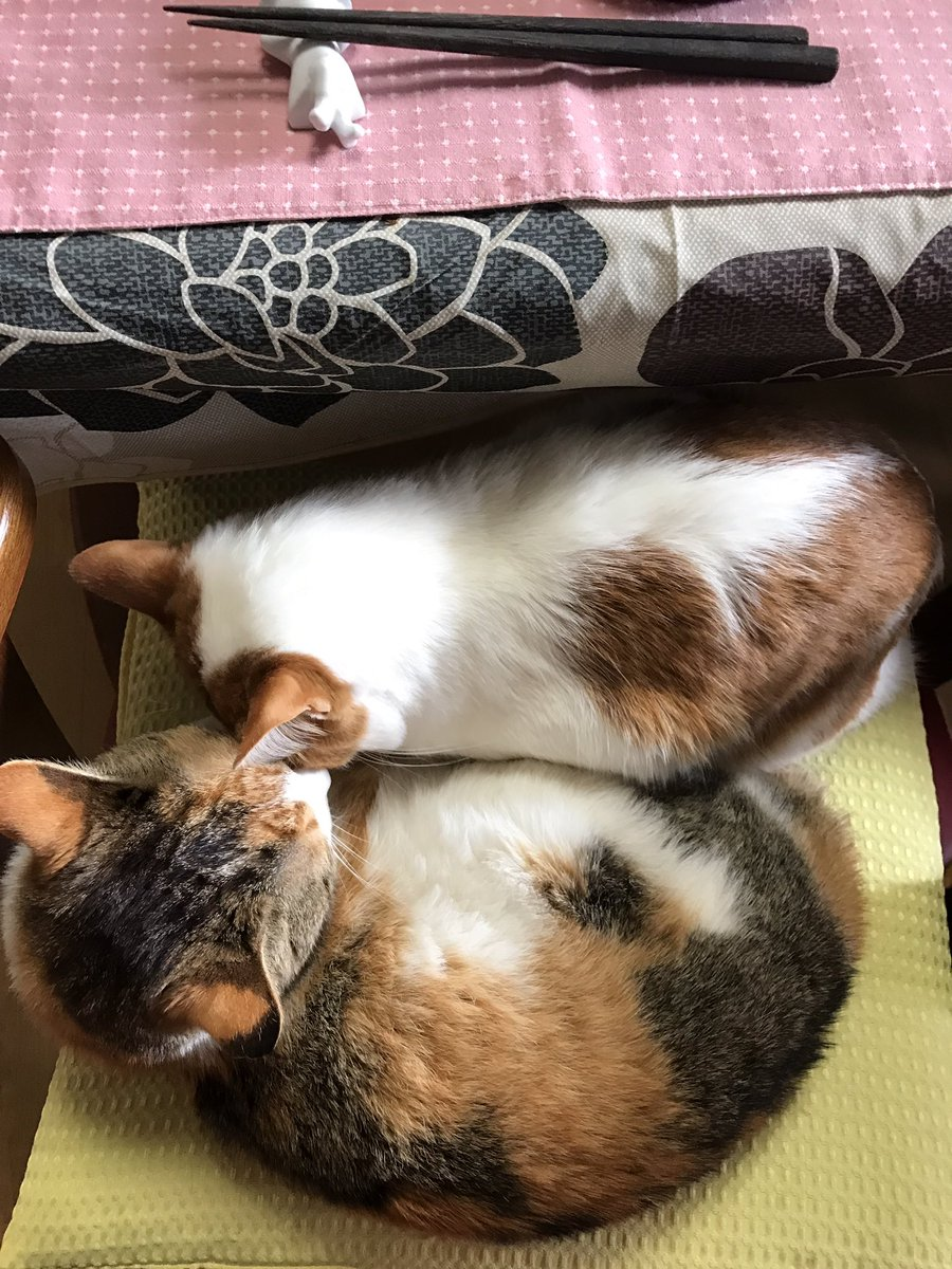 住職の椅子に猫ぎゅうぎゅう