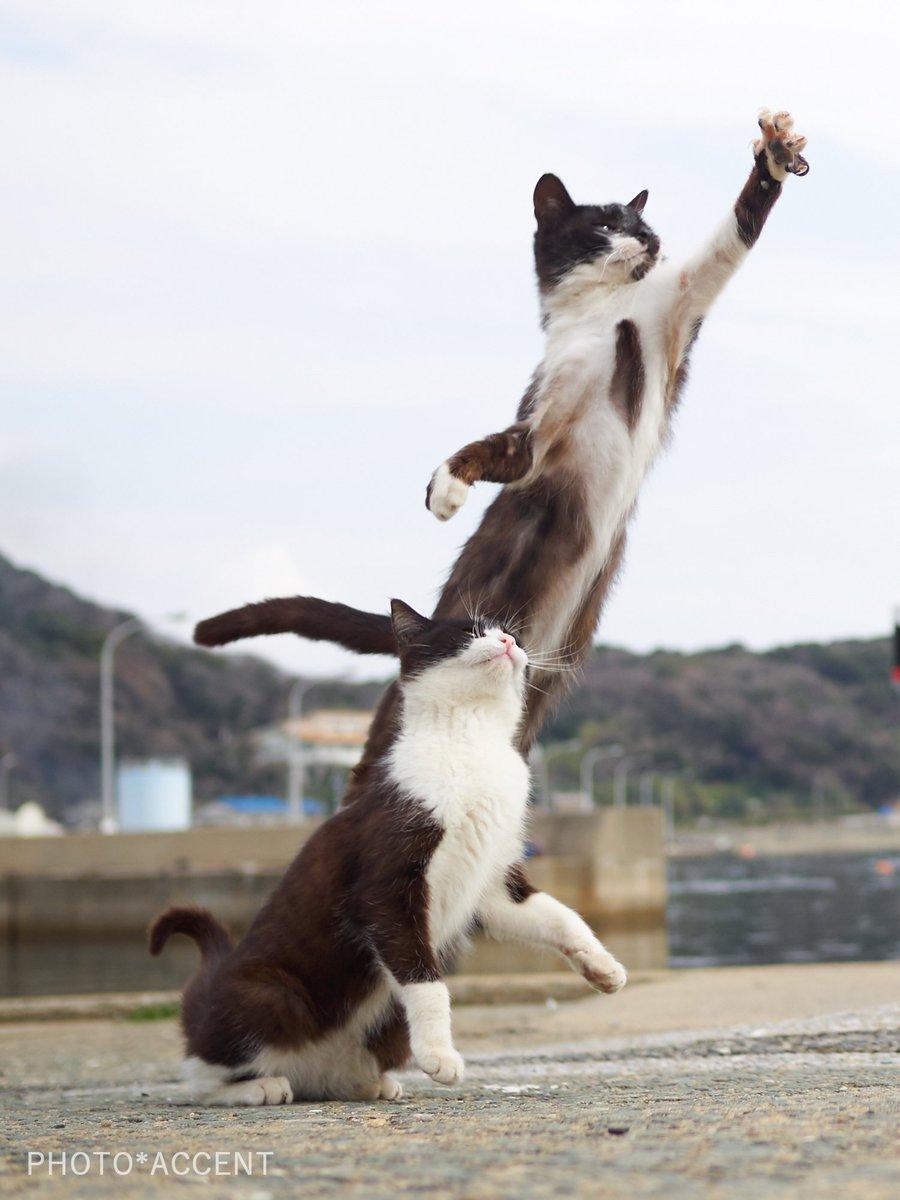 まるで漫画「ジョジョの奇妙な冒険」のスタンド使いとスタンドのような猫