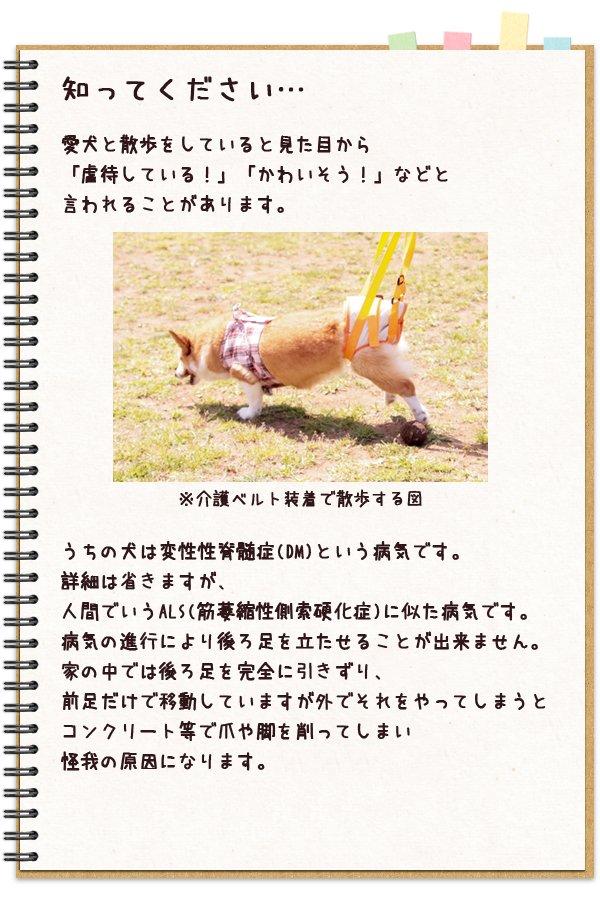 脊髄の病と闘いながらも散歩を楽しむ犬