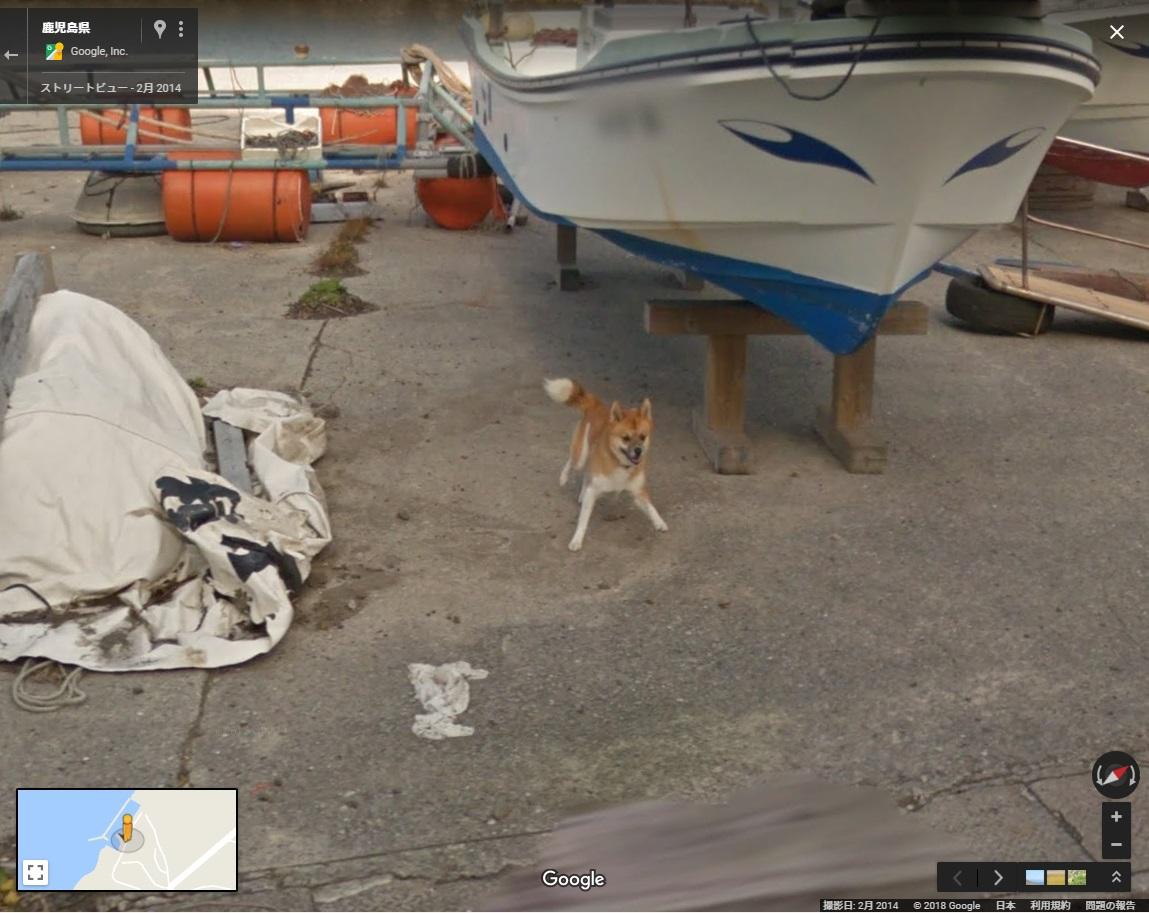http://news.biglobe.ne.jp/img/blnews/animal180405_01.jpg