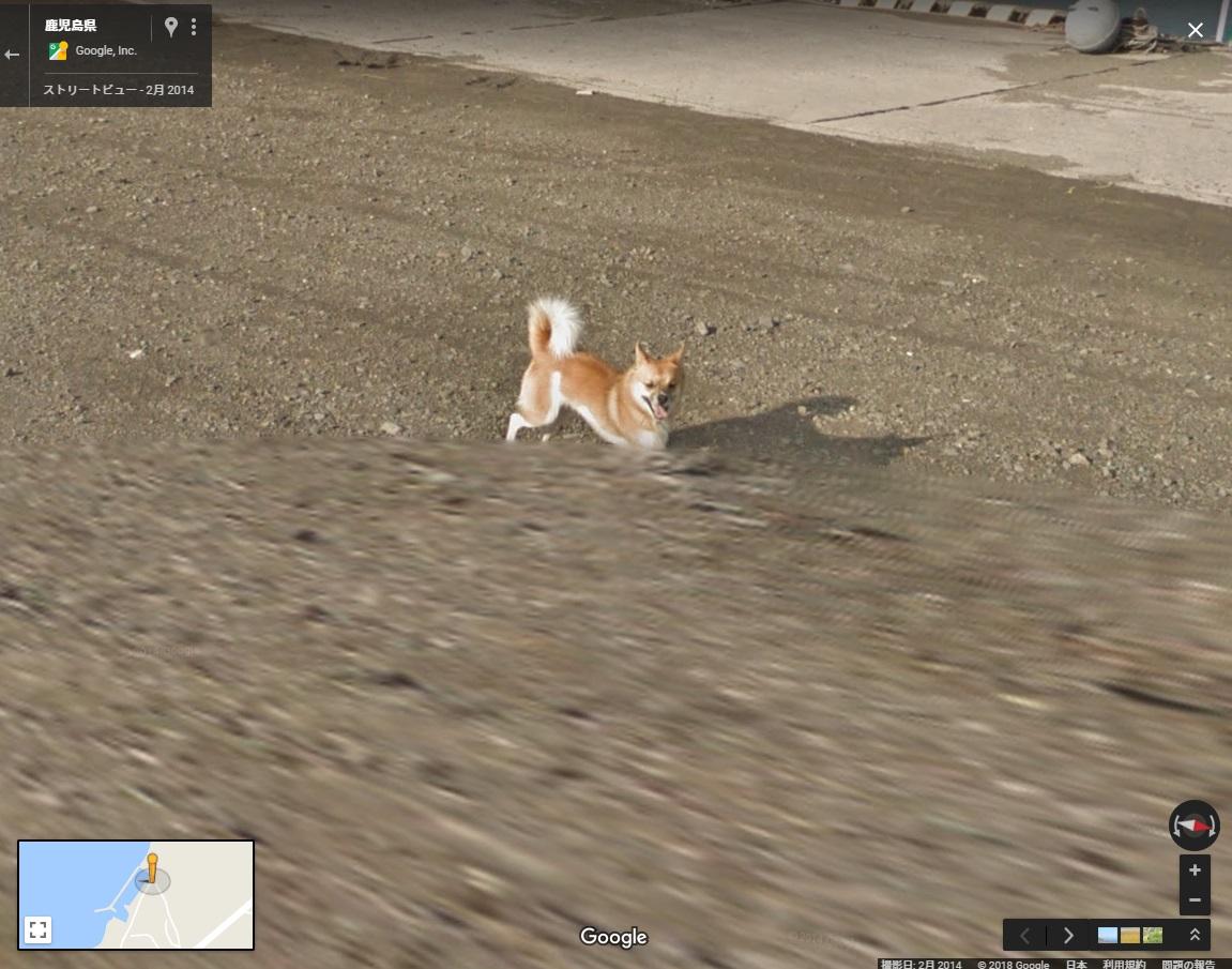 ストリートビューの撮影車を必死に追いかける犬
