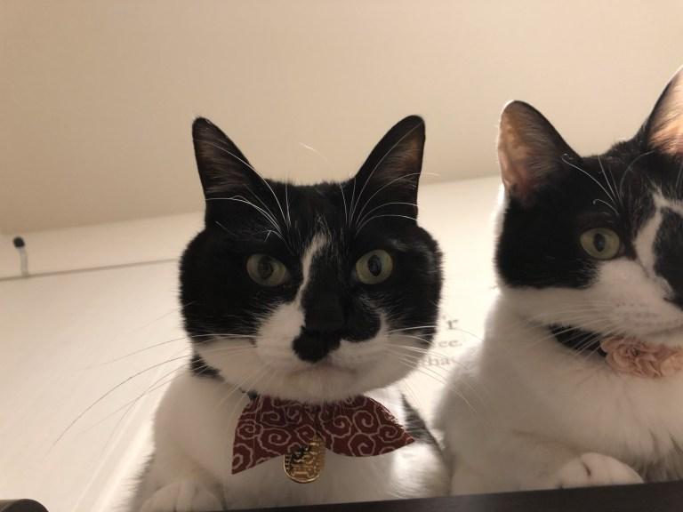 過去最長の寝坊をした飼い主を冷ややかに見下ろす猫たち