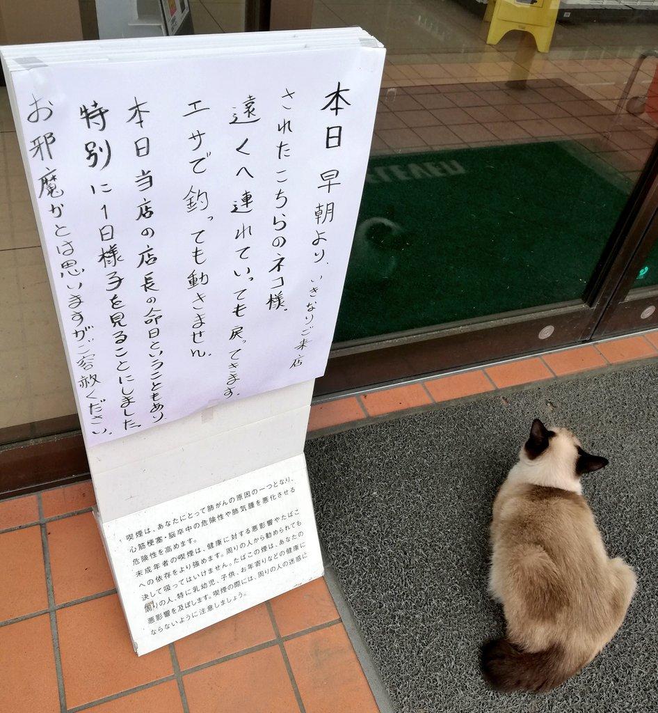 店内を見続ける猫と店の張り紙