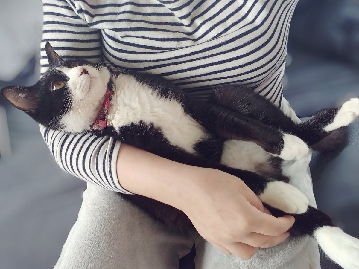 飼い主以外に抱っこされると抜け殻になる猫