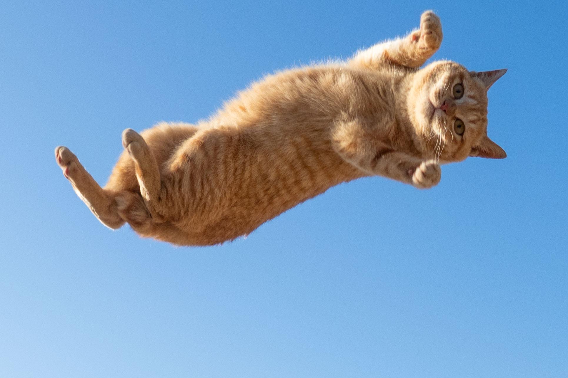 飛んでいる最中に悟った虚無顔の猫