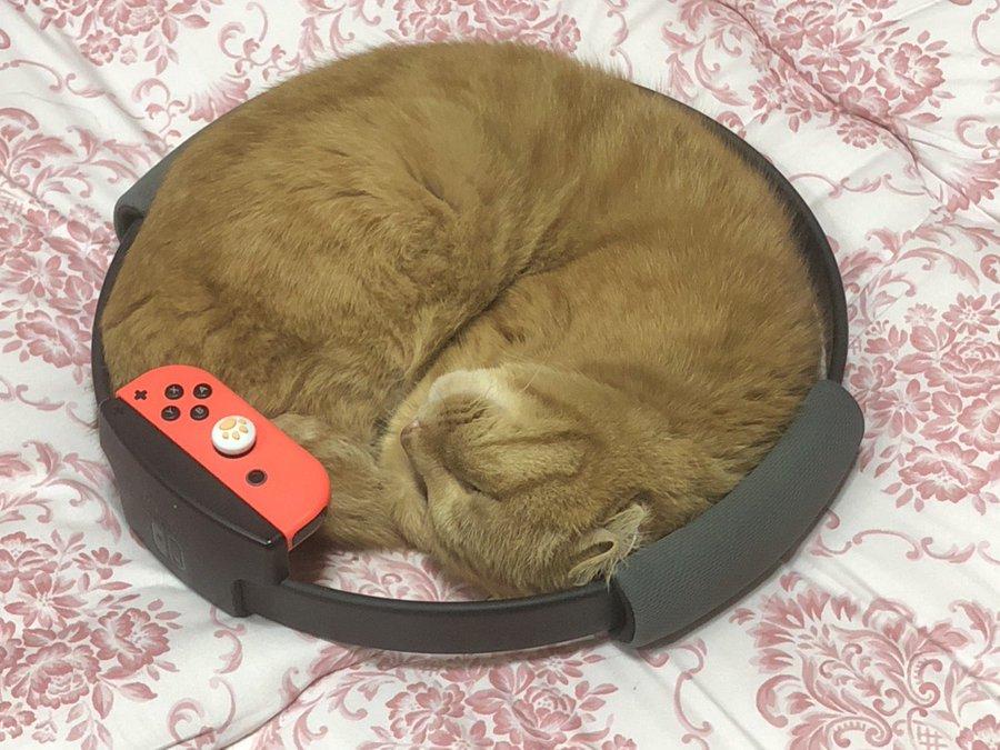 リングフィットに猫ぴったりフィット