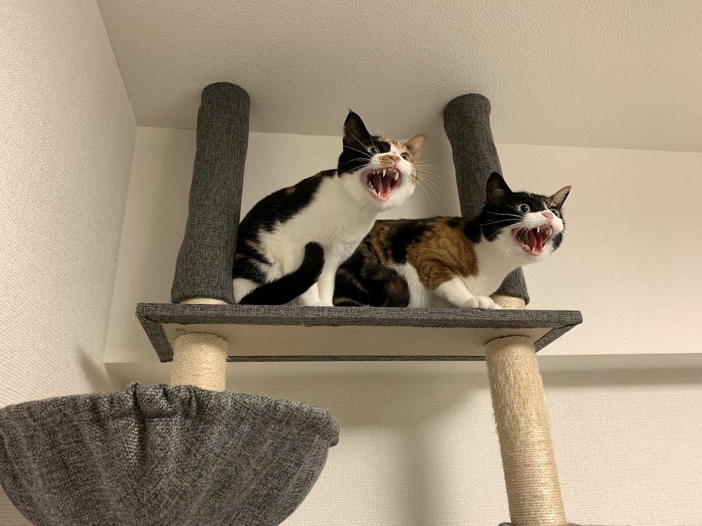 掃除機は絶対許さない会の姉妹猫