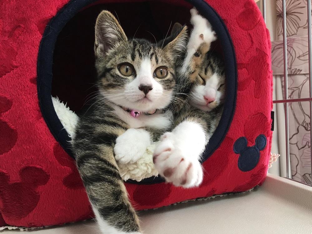 猫によるベッドの間違った使い方