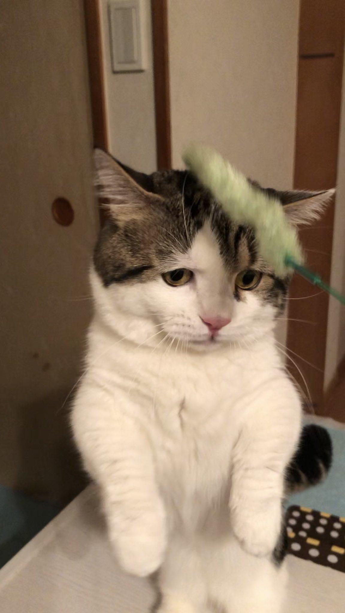 おもちゃを掴めた時と掴めない時の表情の差がすごい猫