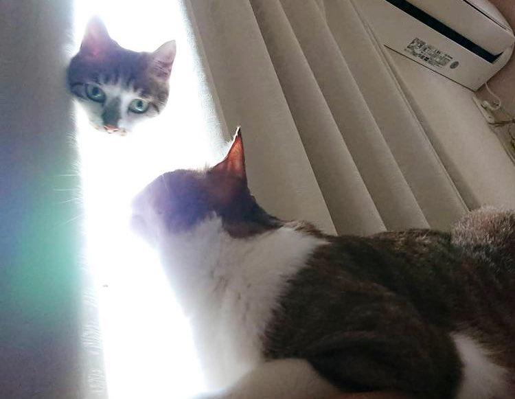 まるで光の中から現れた猫神様のような失敗写真