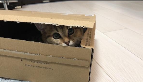 カーテンレールに隠れているつもりの猫