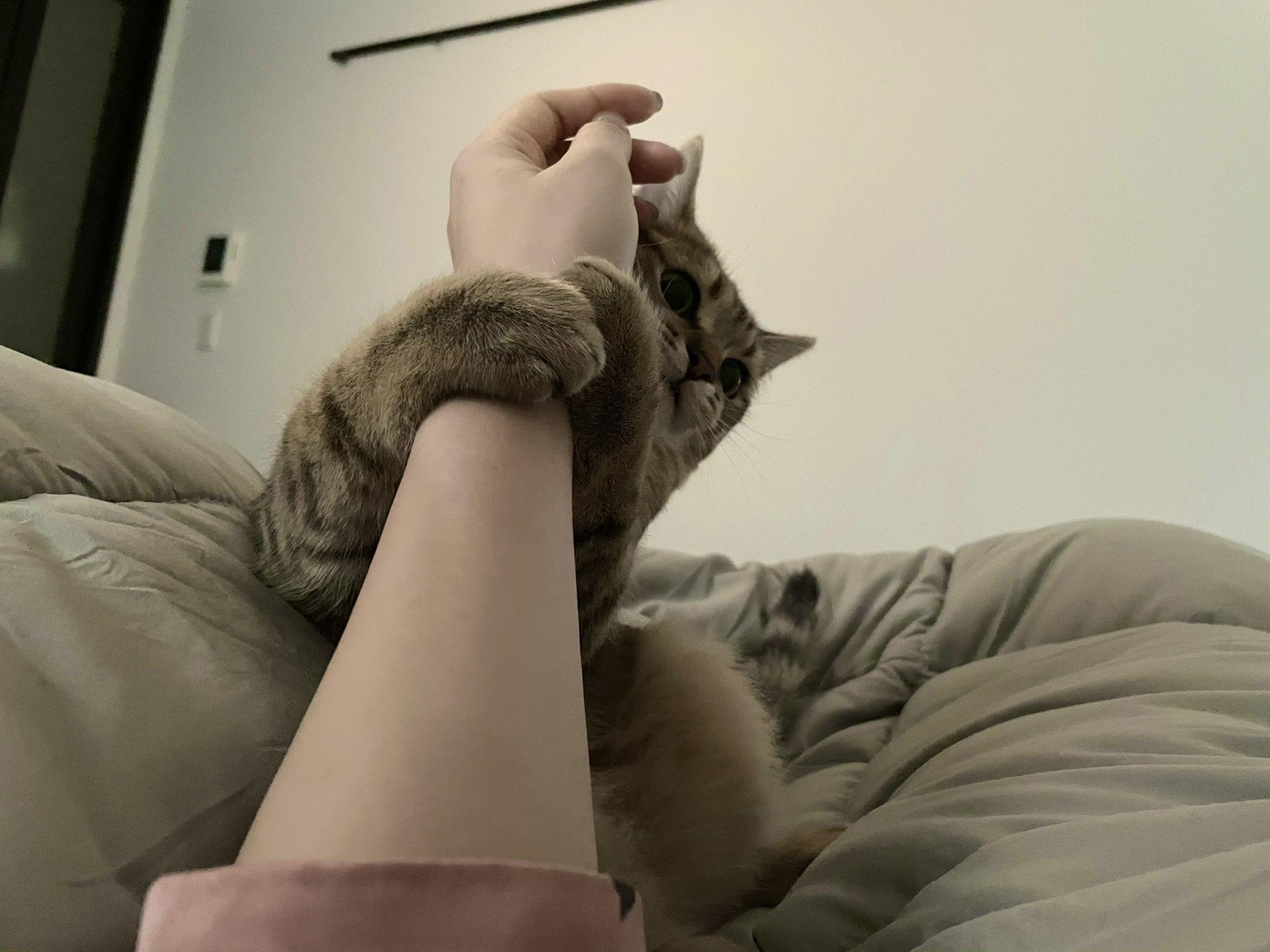 「アラームが鳴る=お留守番」を完全に理解した猫