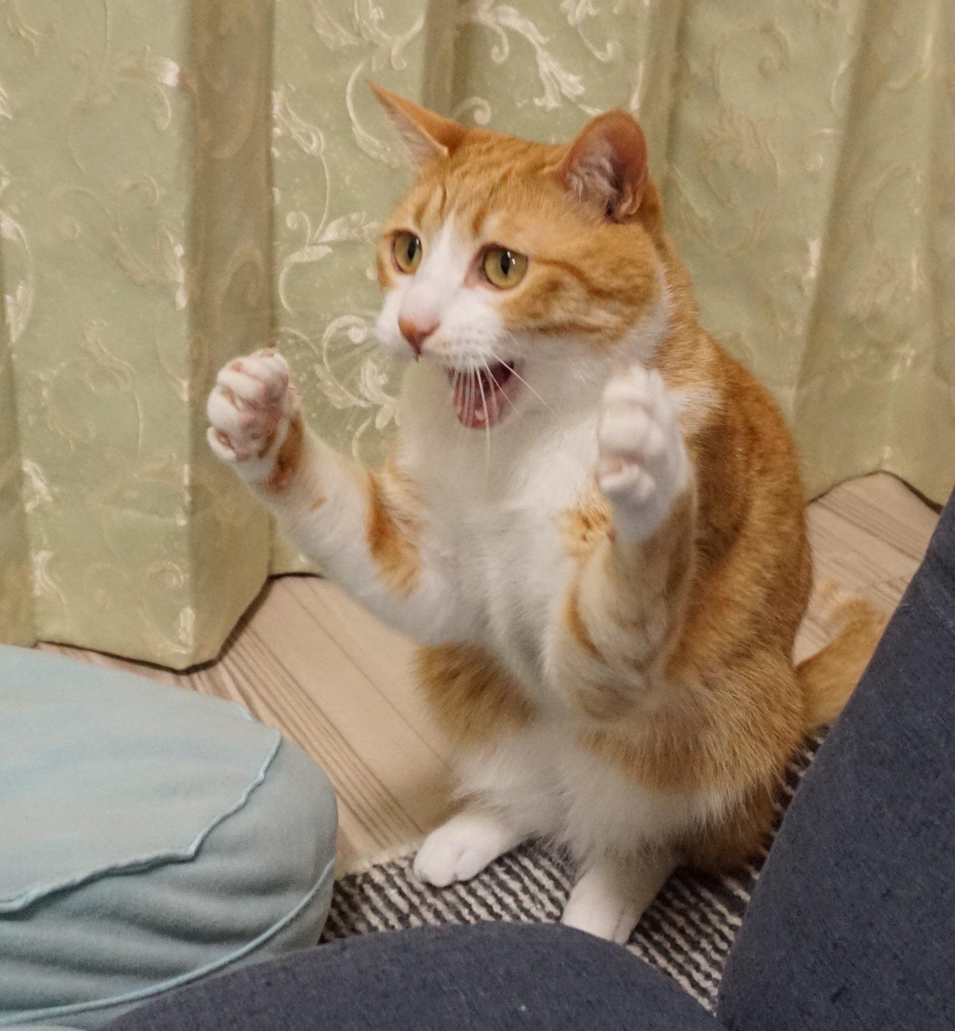猫パンチの奥義を伝授する名トレーナーあらわる