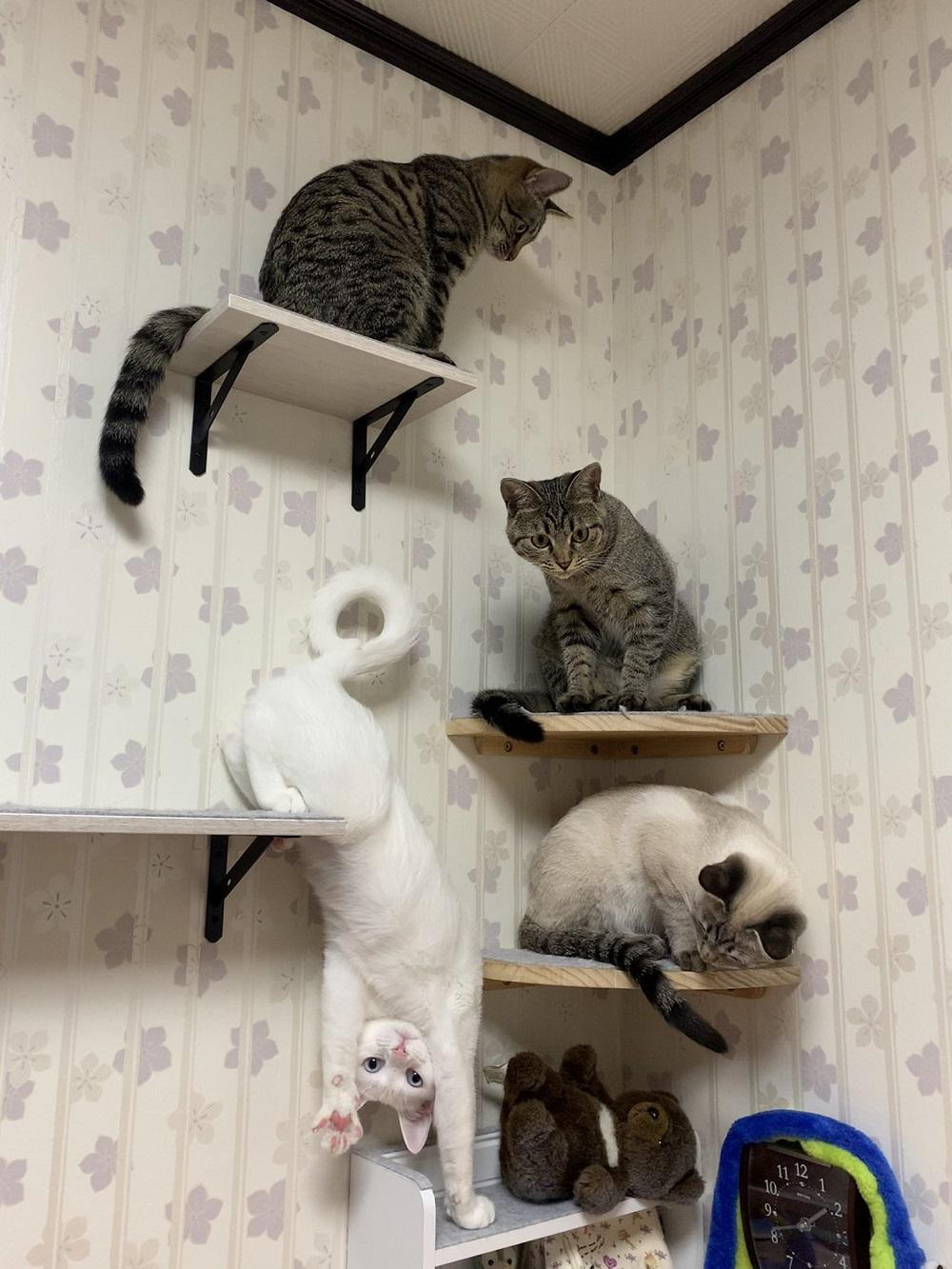 逆さになった白猫