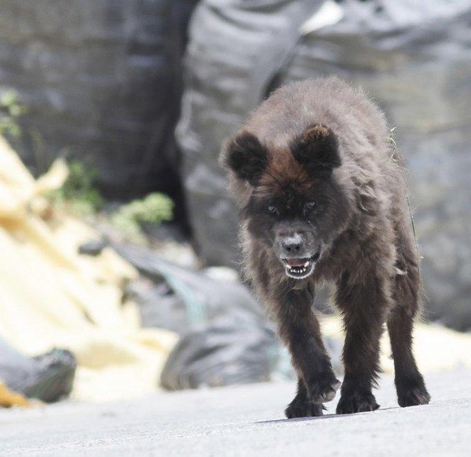 福島に出没した謎の生き物は犬