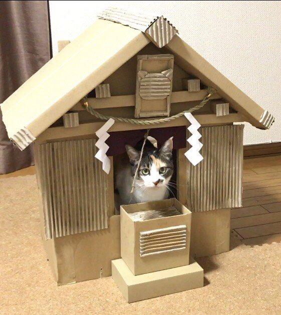 ダンボール神社と猫