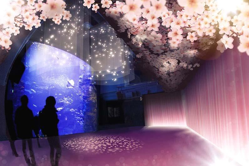 春を楽しむインタラクティブアート『桜といわし』