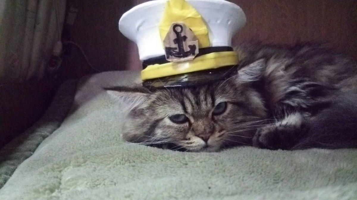 悪さをして罰を受けた航海士ニャンコ
