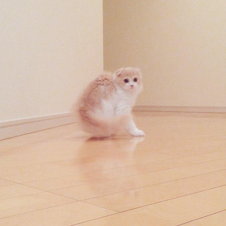 予想外の動きで画面からフレームアウトする子猫