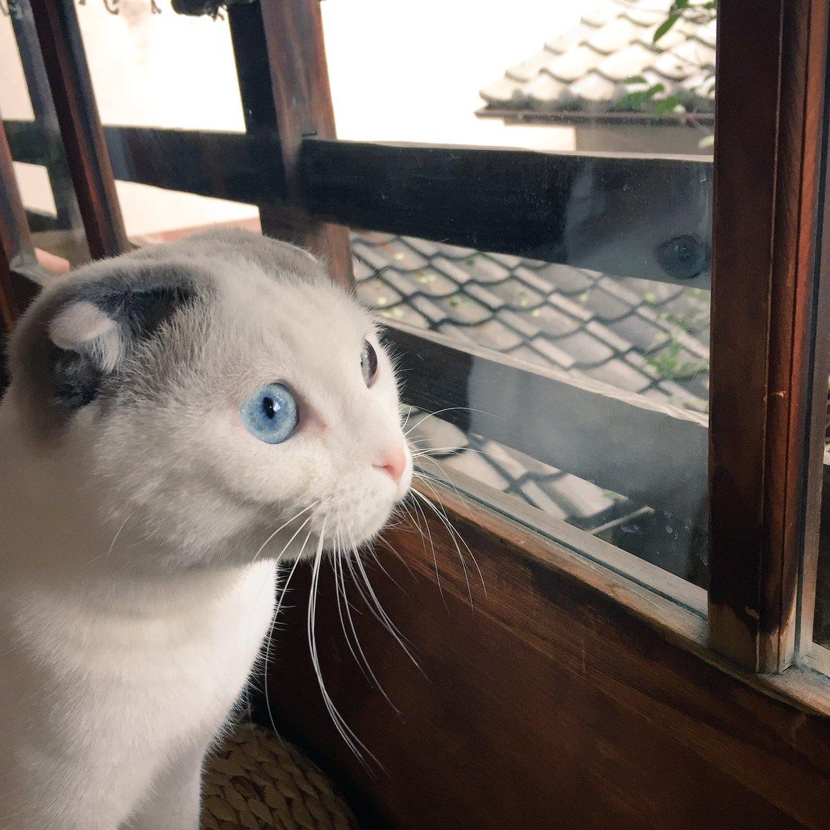 降り積もる雪を窓際に並んで眺める猫