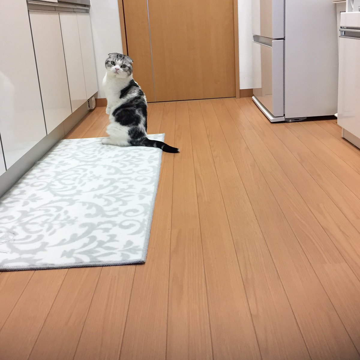 ご飯をねだり続ける猫