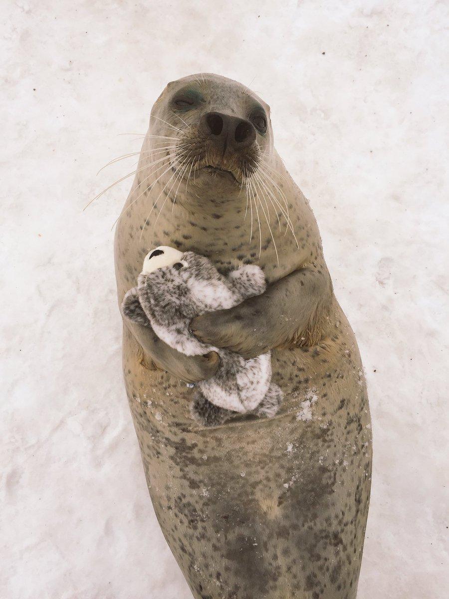 アザラシのぬいぐるみを抱っこしてポーズをとるアザラシ