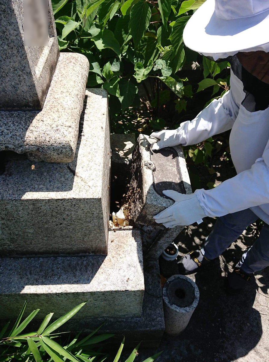 お墓の中にニホンミツバチの巣