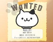 迷い猫を探せる「ねこもに」が提供開始 ペット探偵による「ねこ捜索サービス保険」付き