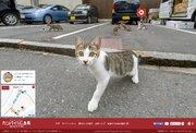 案内するニャ!ネコ目線で街を探索できる「広島CAT STREET VIEW尾道編」が公開!