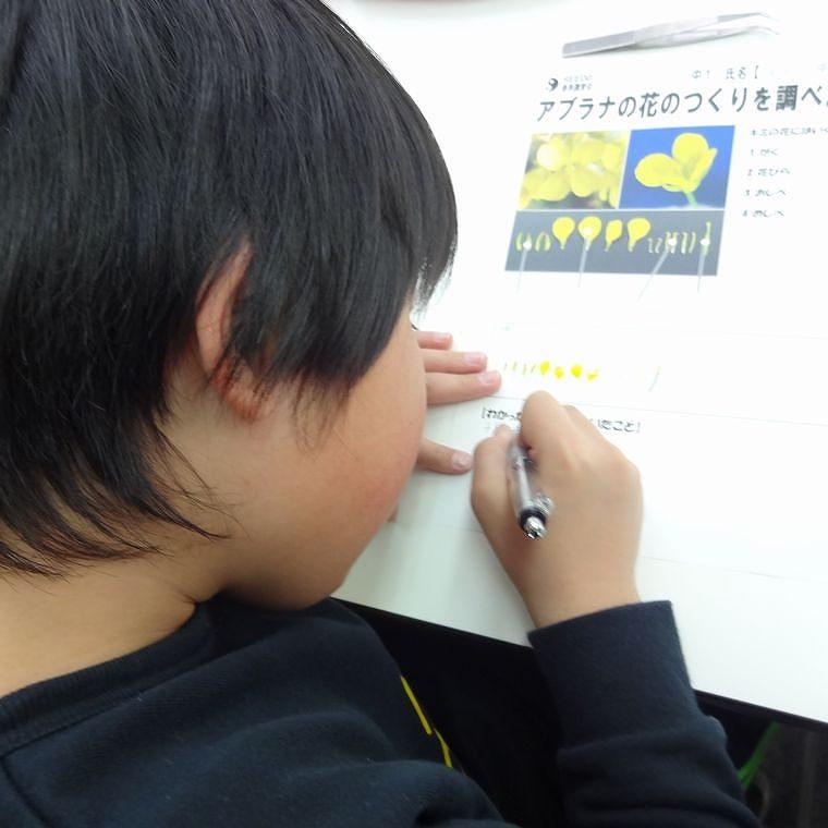 シーズ 鎌倉 学園