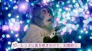 【Jタウン動画大賞】インスタ映え賞・栃木県/イケメンとデートする「インスタグラマー猿」