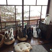 雪見にゃんこ 降り積もる雪を窓際に並んで眺める猫が可愛いと話題に