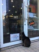 ネコがドア前で「威力業務妨害」? 東池袋のカフェの貼り紙がほほえましい