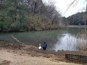 「まあ、隣にスワンなよ」 お悩み相談中?池の前にたたずむ人間とオオハクチョウの友情に反響