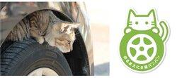 画像:日産が猫バンバンの呼びかけ本格化 猫の事故を防ぐ「#猫バンバン プロジェクト」特設サイトを公開