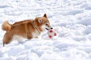 雪が降ると「犬は喜び庭かけまわる」 犬の本音は?動物病院に聞いてみると...