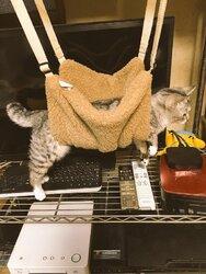 画像:猫用ハンモックの理想と現実 お腹だけ乗せて宙づりになった猫が可愛いと話題に/画像提供:ココニャ(@kokonananya)