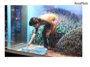 水槽の水を全部抜く、春の「水槽ピカピカ大作戦」サンシャイン水族館