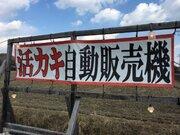 ロッカーを開けて、牡蠣をゲット! 兵庫県の「活カキ自販機」が生まれた理由