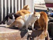 猫の不妊・去勢は人間のエゴなのか?